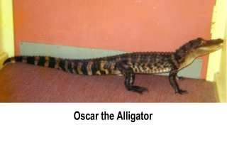 Oscar da Alligator